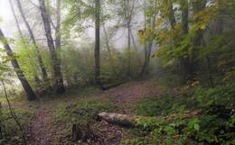 Осенний лес. / ***