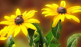 цветочная идиллия / клумба, утро, пчелки везде порхают