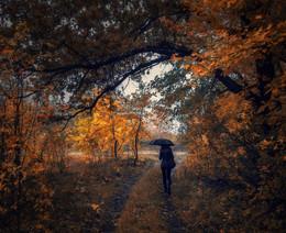 Осенняя история / Я пытаюсь забыть, но порой возвращаюсь в неё – В эту дивную осень, что стёрла все грани запретов. Я попала в канву одного из банальных сюжетов, Хоть сарказмом гортанным плевало мне вслед вороньё… Мне тревожно, осколками солнца, шуршала листва: «Уходи – пропадёшь, будешь раны зализывать вечно…» Только так надоело – по кругу, трусцой бесконечной, А из плена безмолвья так ждали побега слова… Златогривые вихри уносят в далёкие дни, Что наполнены смыслом и светом желанных признаний, Прерываемых шёпотом, радостных мук узнаваний... В них удар отчуждения – словно щелчок западни… (Т.Шатилова)  http://www.youtube.com/watch?v=IeNne64xKtQ&nohtml5=False