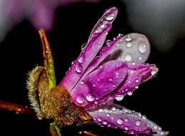 весенняя капель / А вообще то я вчера попал под дождь.. А с утра солнышко так светило...