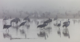 В белом тумане / Агамон Ахула. 2016г.