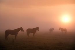Утро туманное / Туманное утро на Желтом Береге.