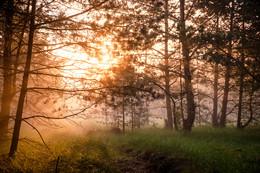 Утро туманное: рассвет в лесу. / Туманное утро в лесу около Желтого Берега.