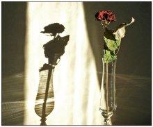 свет и тень / увядшая роза