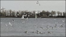 birds / ...