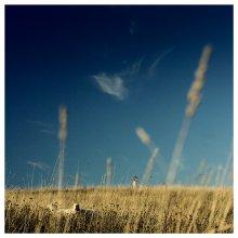 молчание ягнят / в последний солнечный день осени (а может и всего) 2007 года. браславы. резвимся на солнце с баранами