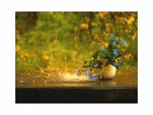 А просто дождь сегодня был.... / Фото сделано в своём саду, на прошлой недельке.