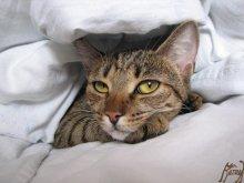 теперь здесь сплю я! / наглая кошачья морда...