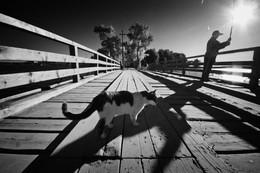 Кошка ждет улова в Ниловой Пустыни летом / Кошка ждет улова в Ниловой Пустыни летом