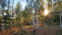 березовое раздолье / утро, сентябрь, солнце встает, красиво кругом