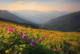 Горные цветы / Кавказ Абхазия