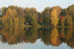 Осенняя разукрашка / Осень.