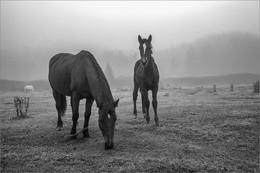 Лошадки / Алтай