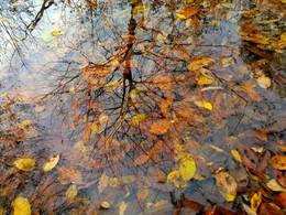 Oсенняя палитра / отражение