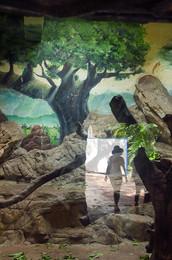 Мечты по Антананариву / Без описания