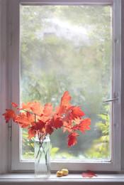Ноябрь / Осень