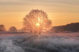 Рассветная / морозное утро