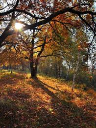 В осеннем лесу / Под Киевои