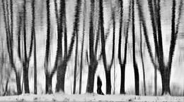"""Земную жизнь пройдя до половины... / """"Земную жизнь пройдя до половины,  Я очутился в сумрачном лесу ...""""  Данте """"Божественная комедия"""""""