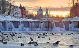 Пятничная зимовка / Птицы остались зимовать на реке в полынье