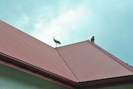 В очікувані польоту / На даху