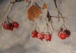 Зимние ягоды / ***