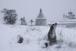 Поминальная молитва / Пес воет на старом монашеском кладбище на Соловецких островах.
