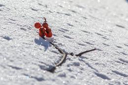 Ягоды на снегу) / Морозный солнечный день. Птицы наслаждаются витаминным коктейлем ягод.... от птичьей активности с содроганием рябина роняла ягоды в снежные сугробы...