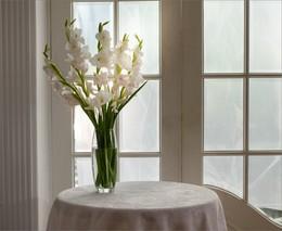 Белая пятница / Белый гладиолус
