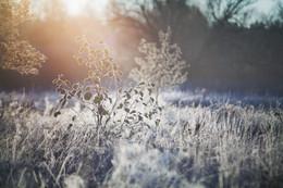 Первые заморозки / октябрь 2016