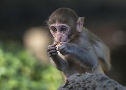 """""""ВКУСНЯШКА!"""" / Китай остров обезьян"""