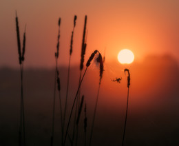 А вот и Солнышко! / Рассвет летом на лугу возле речки