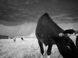 Коровы пасутся в Заполке летом 2010 примерно / Коровы пасутся в Заполке летом 2010 примерно