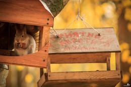 Приятного аппетита | Bon appétit / Фотография 15-го года, сделана в Севастопольском парке, где в тёплую пору года можно найти для себя много интересного, а сейчас, до календарной весны 30 мин, поэтому захотелось чего-то тёплого