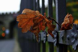 / Осень на ограде