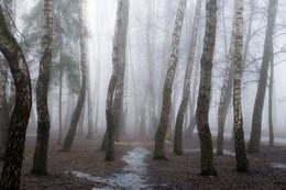 Тропинка в туман / Весенние туманы.