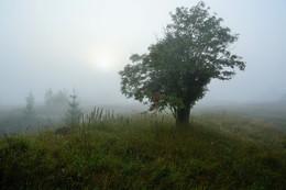 Туманное утро ... / Утро ...