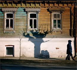 Многоножки прячутся от солнца под деревом / прогуливаясь по старым районам города...