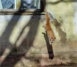 Мартовский не кот / а просто белка какая-то...