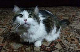 Тимоша и Маня / Мои любимые кот и кошка