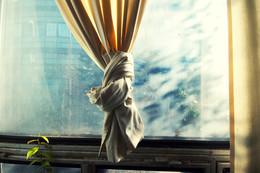 Растение с занавеской у окна в Научном Центре весной 2009 / Растение с занавеской у окна в Научном Центре весной 2009