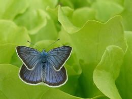 Бабочка / Летние зарисовки