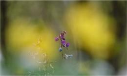 Auf dem Waldboden / Es blüht im Moment überall so schön