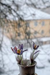Весна идет — весне дорогу! / Утро 20 апреля.