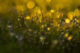 Кукушкин лён / когда рядом мох,влага,свет и фантазии