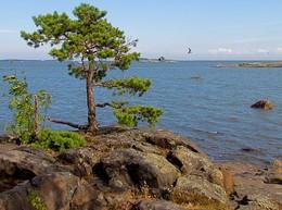 На скалистом острове / Балтика. Финский залив