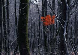 Последний / Красивый фонарик стоит на снегу. Что-то я вспомнить его не могу. Может быть, это листок-сирота, Может быть, это обрывок бинта, Может быть, это на снежную ширь Вышел кружить красногрудый снегирь, Может быть, это морочит меня Дымный закат окаянного дня.   Арсений Тарковский