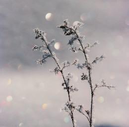 Элементарная частица / Искрится снег