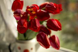 Время красных тюльпанов. / тюльпаны, май, натюрморт, окно