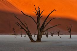 Дедвлей / Дедвлей (Долина Смерти). Мертвый лес на закате
